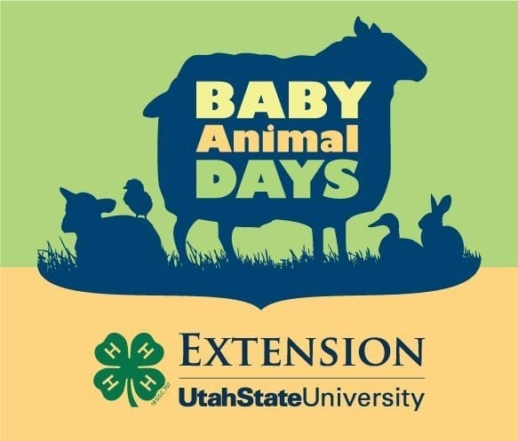 What to do in Utah:  Baby Animal Days in Kaysville (and Giveaway!)