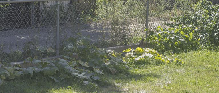 garden back fence