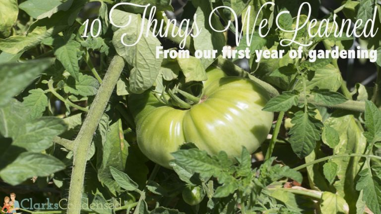 10 Lessons Learned During My First Summer Gardening