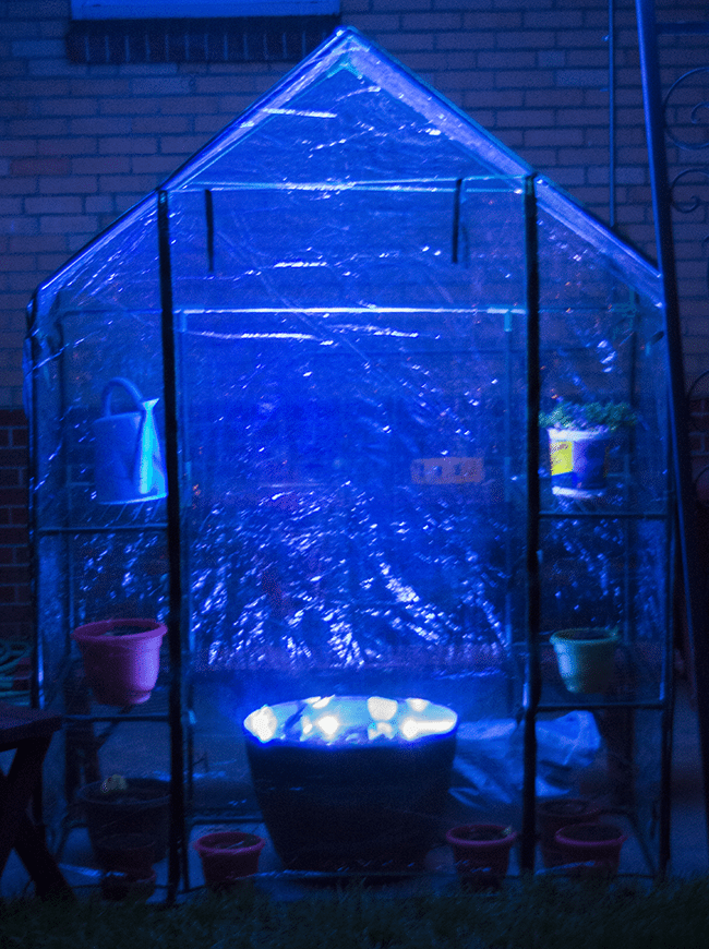 blue light greenhouse