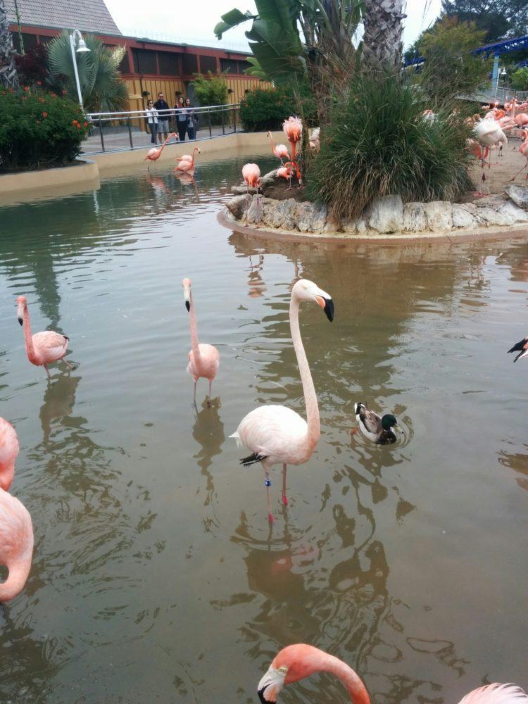 Flamingos at Sea World
