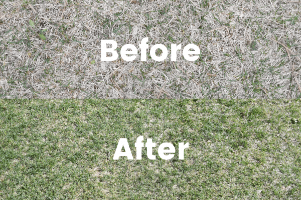 Sunday lawn care before and after photo